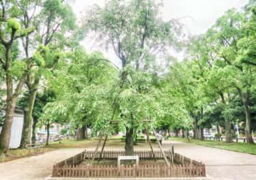 桜の大通り公園を歩く