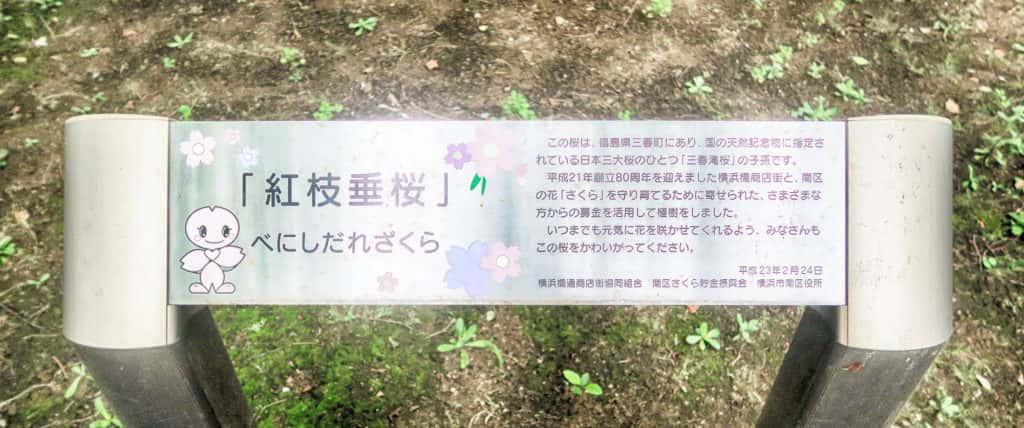 紅枝垂桜案内板